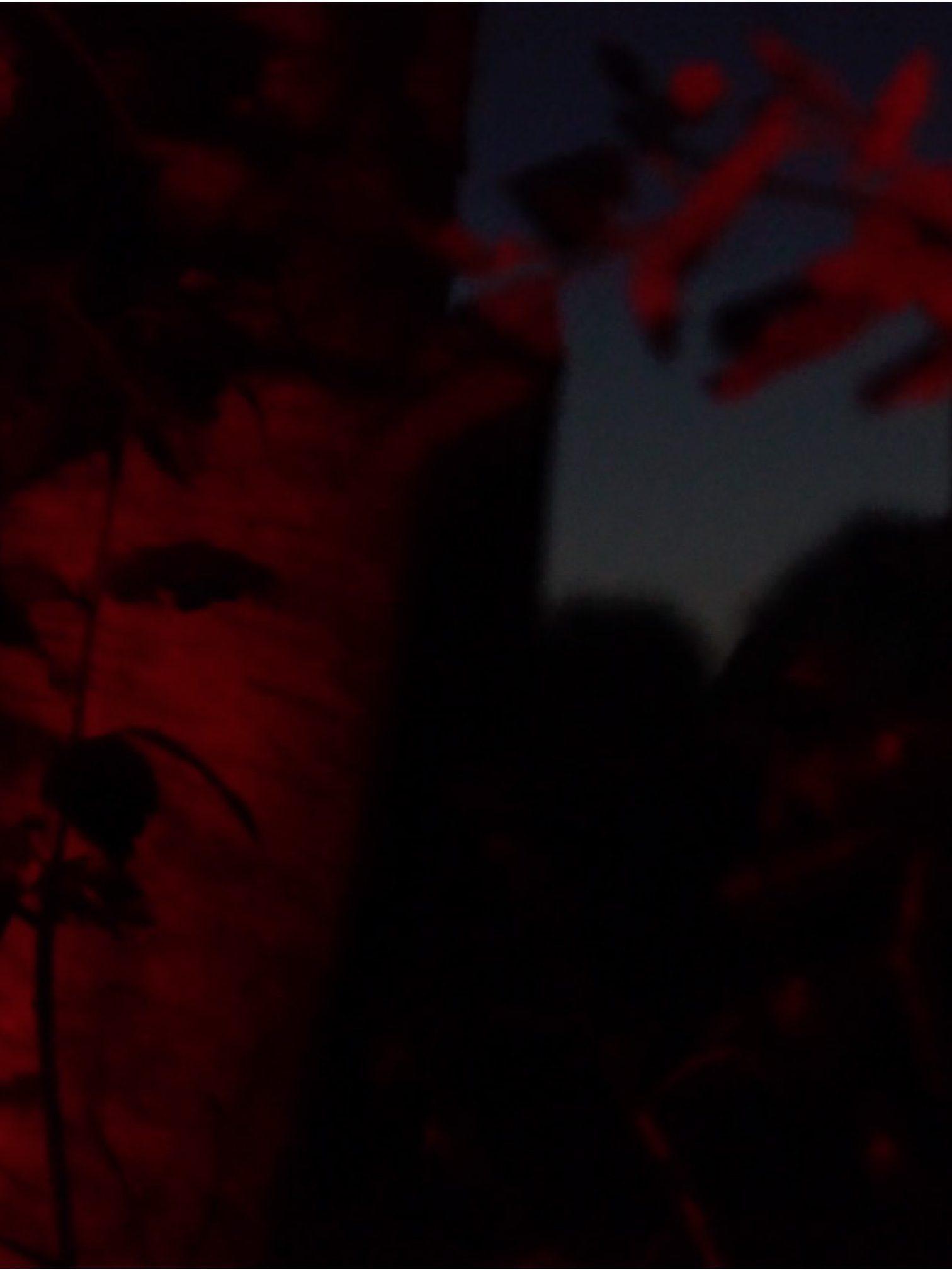 Forêt rouge
